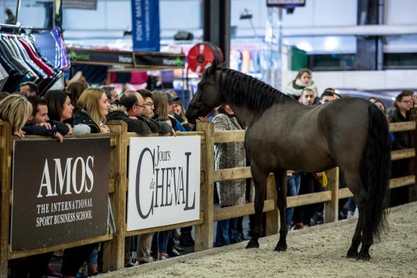 CA Horse Show