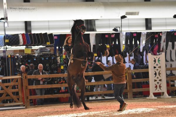 Education au cheval de spectacle