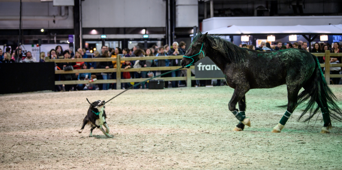 Salon du Cheval - Les animations