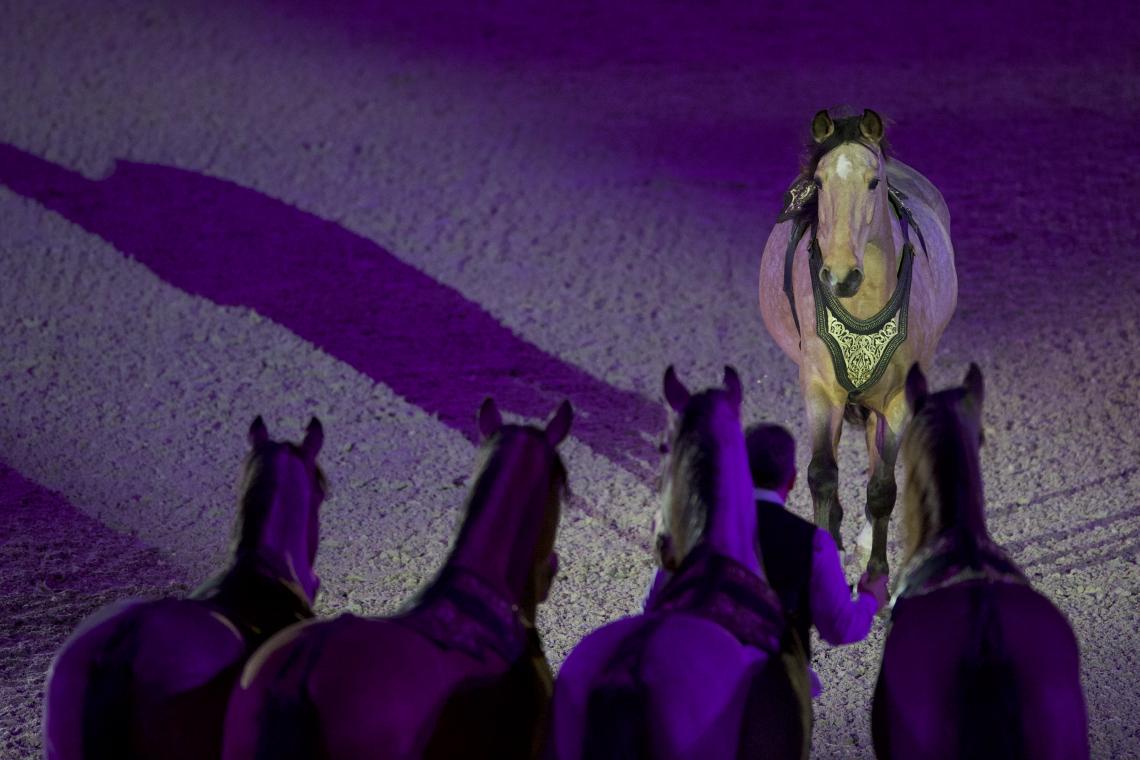 Spectacle Nuit Ibérique - Hasta Luego